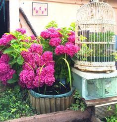 Ber ideen zu mini teich auf pinterest for Gartenteich aus reifen