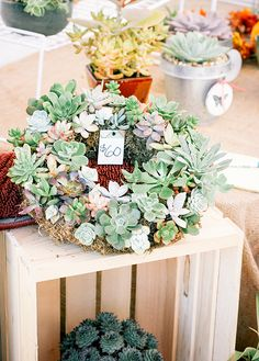 succulent wreath for door; found at: treasure island flea / san francisco