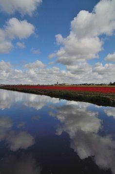 Tulips, Keukenhof, Nederland