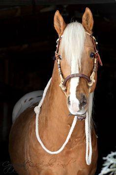 3Winds Smok N Hawk Palomino Appaloosa Stallion