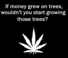 How often do I make this point about a Moneytree? :p