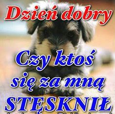 Motto, Good Morning, Humor, Pictures, Animals, Facebook, Text Posts, Polish Sayings, Buen Dia