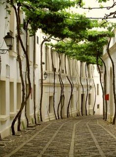 Beautiful Street in Jerez, Spain. Jerez de la Frontera is a municipality in the province of Cádiz in the autonomous community of Andalusia, (Andalucía in Spanish) in southwestern Spain, situated midway between the sea and the mountains. Jerez is the trans What A Wonderful World, Beautiful World, Beautiful Places, Beautiful Streets, Beautiful Scarves, Oh The Places You'll Go, Places To Travel, Tree Canopy, Beach Canopy