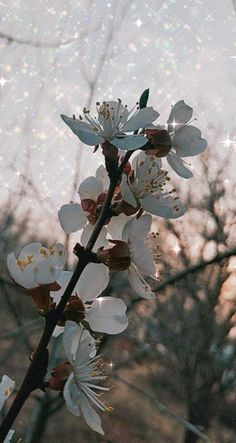Apricot Blossom, Plant Leaves, Spring, Plants, Plant, Planets