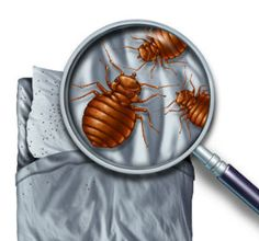 7 Best Bed Bug Exterminator Nj Nyc Images Bed Bugs Treatment