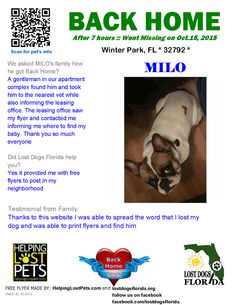 Helping Lost Pets | Dog - French Bulldog - Back Home