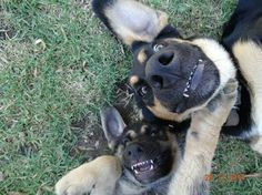 Sheriff & Ranger selfies; lol.  I love the names too; I'll add that to my growing list of dog names!!