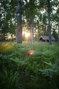 skog_kvall