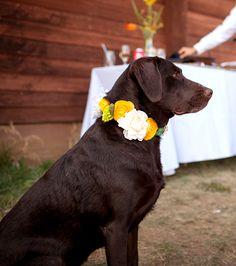 Chocolate Labrador wedding dog flower crown Toni Kami ❀Flowers in their coats❀