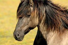 Cheval, Nature, Animaux, Meadow - Image gratuite sur Pixabay