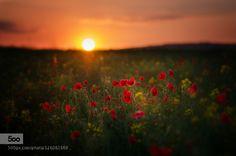 evening mood by zanfoar