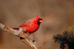 Ny hope bird