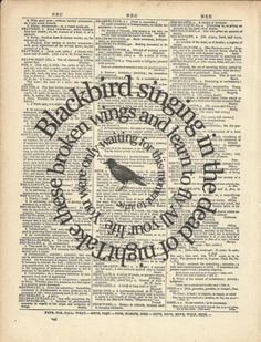 blackbird singing in...