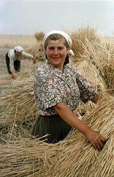 State farm in Ukrain, 1950s.