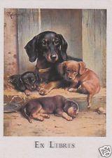 EX LIBRIS BOOKPLATE CANE BASSOTTO TEDESCO dachshund