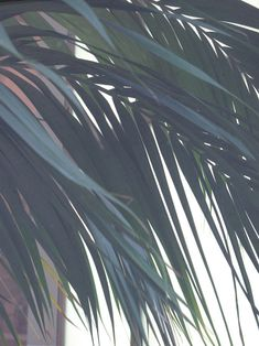 PATTERNITY // PALM STREAK    CURVED / LAYERS / LEAVES / MUTED / NATURE / STREAKS