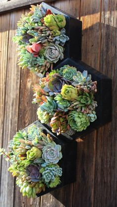 This item is unavailable - 10 Hexagon Vertical Garden Planted with succulents - Succulent Arrangements, Cacti And Succulents, Planting Succulents, Vertical Garden Plants, Succulent Gardening, Organic Gardening, Vertical Gardens, Indoor Gardening, Gardening Tips