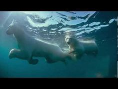 A behind the scenes look at the rewards of filming underwater in the Arctic Ocean. The film crew of the IMAX® documentary To The Arctic describe the safety measures necessary for taking an IMAX camera in freezing waters and the wonderment of filming polar bears and walrus beneath the surface.