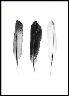 Black And White Feathers Poster in the group Prints / Black & white at Desenio AB (3634)