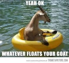 funny goat photos - Google Search