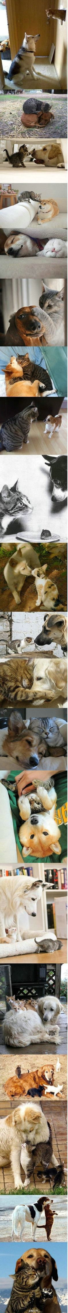 The amazing love/bond between some dogs and cats never ceases to lift my spirit! Look at the beautiful photos and feel the love!