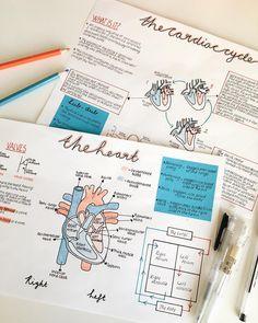 pin ✰ bellaxlovee - # Bildung lernen pin ✰ bellaxlovee - New Ideas Nursing School Notes, College Notes, Cute Notes, Pretty Notes, Heart Diagram, School Study Tips, School Tips, Studyblr, Science Notes