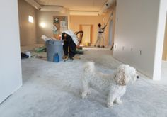 """Show Your Dog How It's Done With These Great Training Tips! Photo by Alex Beattie A better name for the art of training your dog would be """"human training"""". That's really because an owner must train himself, before h Sheffield, Home Renovation Companies, Remodeling Companies, Construction Cleaning, Haul, Suites, Dog Training Tips, Interior Design Tips, Home Improvement Projects"""