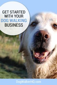 Finally a Solution to getting your Dog Walking Business Started
