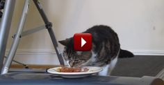 These Owners Find the Best Way to Get their Lazy Kitty to Exercise - LOL
