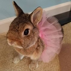 /r/rabbits is an open community where users can learn, share cute pictures, or ask questions about rabbits. Please note we are a *pet rabbit*. Pet Bunny Rabbits, Pet Rabbit, Cute Baby Bunnies, Funny Bunnies, Cute Little Animals, Cute Funny Animals, Fluffy Bunny, Cute Creatures, My Animal