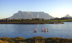 Flamingoes in front of Table Mountain, Cape Town ©Carolynne Geary