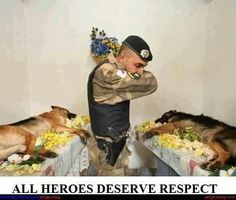 Remember all who serve, big and small, and even our fuzzy soldiers...