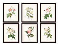 Redoute Roses Floral Botanical Print Set No. 5