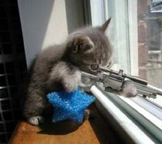 "cute kitty ""Stand back I haz a gun and I haz no idea how to uz it!!!"