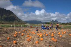 Oahu Family Activities: Waimanalo Country Farms Pumpkin Patch