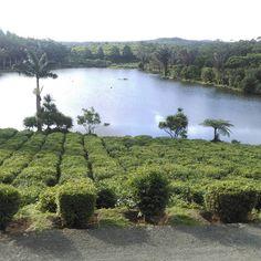 Gorgeous tea plantation in mauritius  #tealife #holidays #mauritius #tropical #travel http://tipsrazzi.com/ipost/1506473959192069497/?code=BToEhWRBQV5