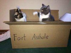 The jerks: