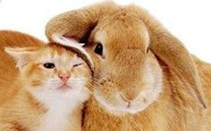Best friends come in all shapes and sizes! #Pets #Bunny #Cat