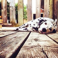 Today's Pup Doggy Dog! Tag a friend who loves dogs! Courtesy of…