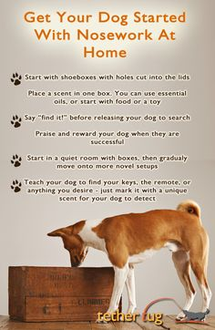 K9 Nosework classes are great for all dogs, even those who are shy or reactive, because only one dog searches at a time. It builds confidence and gives dogs with behavioral problems a productive task to focus on.   You can even get started at home with a few supplies that you already have laying around!