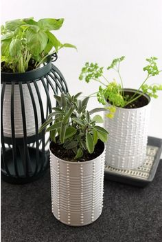 DIY : Indoor Herb Garden - Starlet Blog