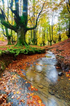 Gorbea Natural Park is a protected area that is located between the provinces of Alava and Vizcaya in the Basque Country (Spain) Fall Pictures, Nature Pictures, Beautiful World, Beautiful Places, National Geographic Photography, Parque Natural, Celebrity Travel, Natural Park, Amazing Nature
