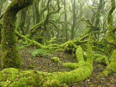 El Parque Nacional de Garajonay, en La Gomera.