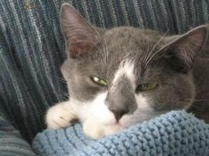 My cat Little Man. Sherrie, Yarmouth, ME. 11/20/13.