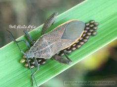 invertebrates by https://www.deviantart.com/dianapple on @DeviantArt