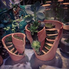 Funny pictures about Broken Pots Turned Into Beautiful Fairy Gardens. Oh, and cool pics about Broken Pots Turned Into Beautiful Fairy Gardens. Also, Broken Pots Turned Into Beautiful Fairy Gardens photos. Broken Pot Garden, Garden Pots, Herb Garden, Vegetable Garden, Garden Crafts, Garden Projects, Diy Projects, Diy Garden, Diy Crafts