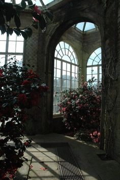 The room at the top of the house was almost empty, but for the light streaming through the windows and the collection of plants and flowers gathered under the glare of the ceiling lights.