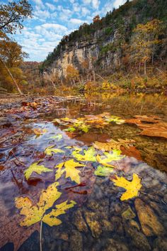 Vilander Bluffs - Tallest bluffs on the Meramec River. Part of Onondaga State Park located in the Ozarks of Missouri.