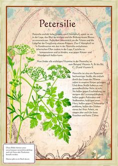 Petersilie www. Healing Herbs, Natural Healing, Herb Garden, Garden Plants, Spices And Herbs, Greenhouse Gardening, Pallets Garden, Plant Illustration, Aquaponics