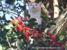 Portal de Anjos: A Sabedoria & O Poder de Cura dos Gatos - 'Conversando com os Gatos'. (Kate Solisti-Mattelon).